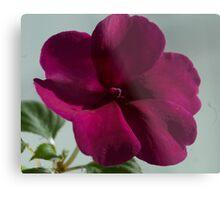Flower in the Window Metal Print