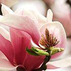 Magnolia by RebekahShay