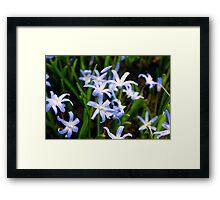Blue Spring 2 Framed Print