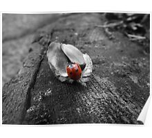 Red ladybird on an empty acorn husk Poster