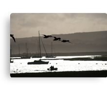 Brent geese, New Forest Canvas Print