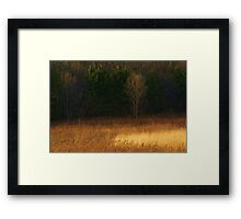 Illinois prairie Framed Print
