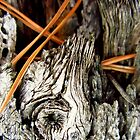Pine needles in stump by sarahtakespics