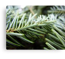 Balsam fir needles Canvas Print