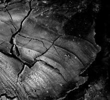 Burnt wood by sarahtakespics