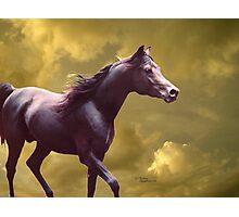 Arabian stallion Stormy sunset Photographic Print