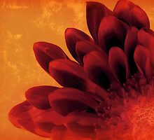 FLAMING FLOWER by PatChristensen