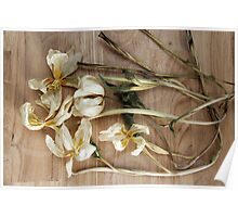 Dried Flowers Poster