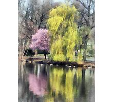 Willow and Cherry by Lake Photographic Print