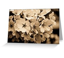 Sepia Cherry Blossoms Greeting Card