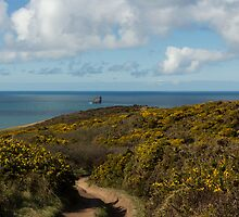 Cornish Seascape St Agnes  by Brian Roscorla