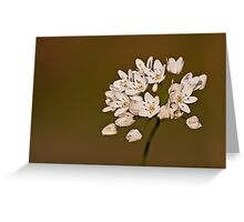 Allium subhirsutum Greeting Card