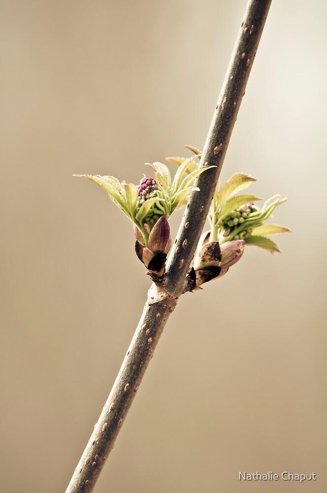 Spring 2012 by Nathalie Chaput