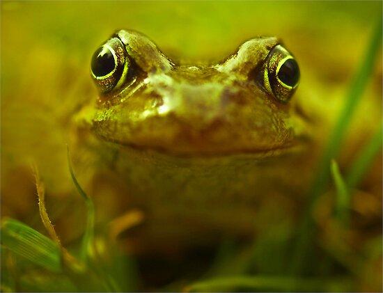 Frog by John Dickson
