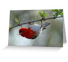 Bird gymnastics-my latest move on the balance beam! Greeting Card