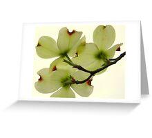 Dogwood Bloom - 5   ^ Greeting Card