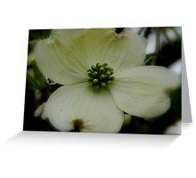 Dogwood Bloom -  6 Greeting Card