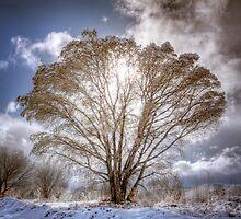 Shine a Light by Bob Larson
