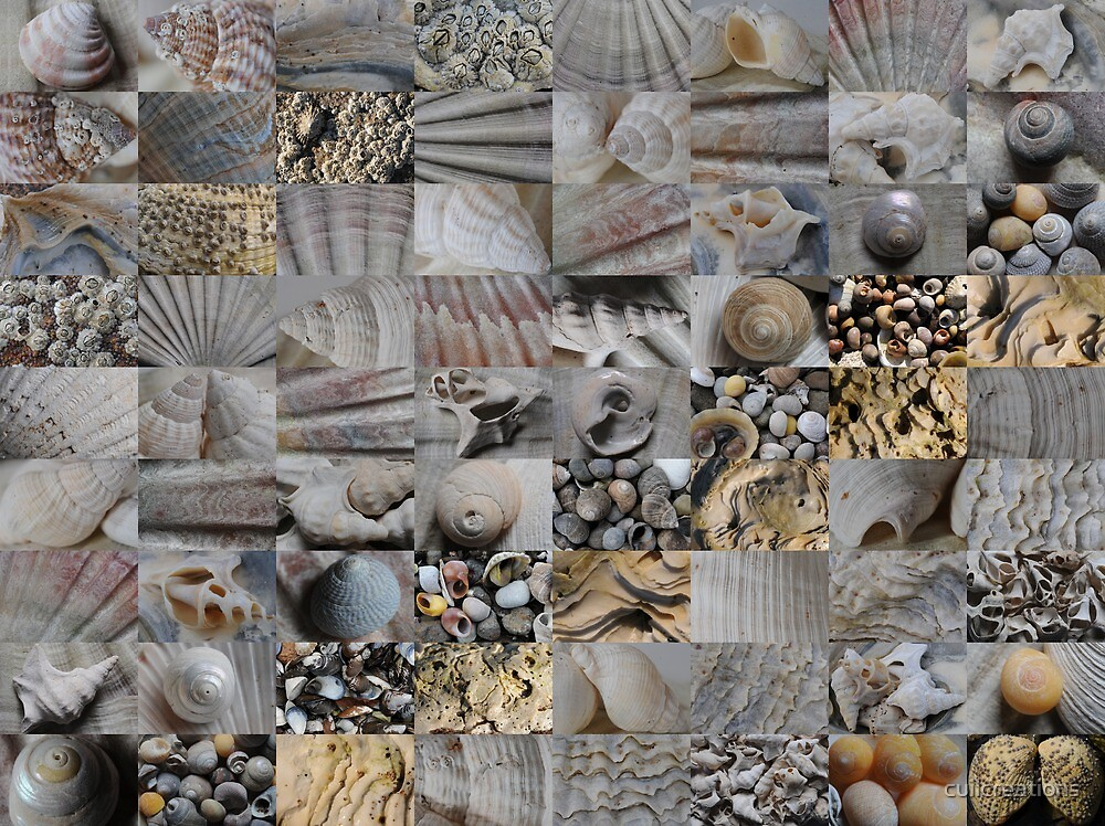Shells from Argyll by cuilcreations