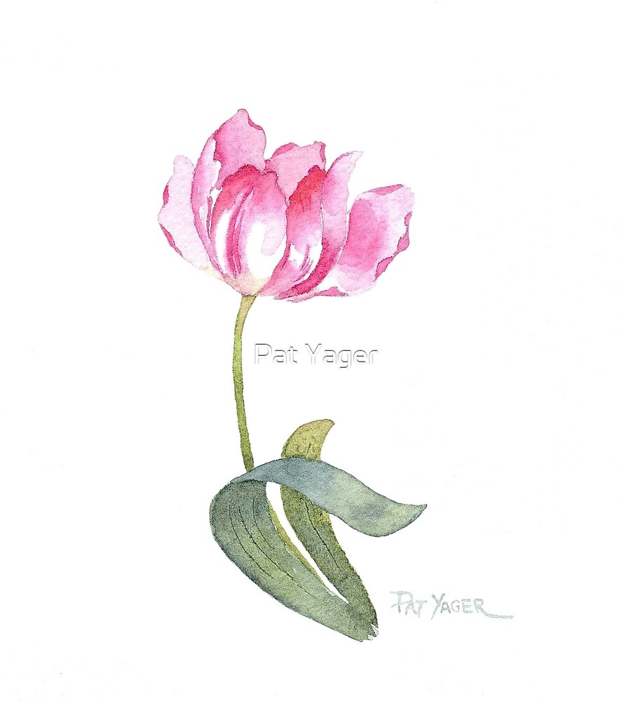 Pink Tulip Watercolor by Pat Yager