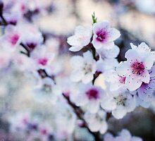 Peach flowers by Laura Melis