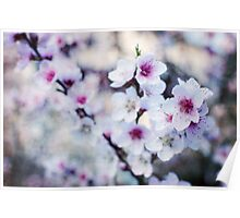 Peach flowers Poster