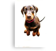 Introducing Dolly Doberman Canvas Print