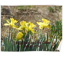 Challenge Winner - Think Spring Poster