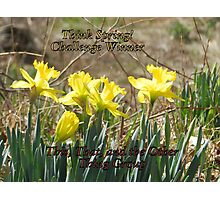 Challenge Winner - Think Spring Photographic Print