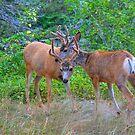 Deer Friends by JamesA1