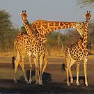 Wanna neck baby? by Explorations Africa Dan MacKenzie