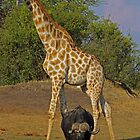 Two old warriers by Explorations Africa Dan MacKenzie