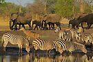 Taking their turn by Explorations Africa Dan MacKenzie