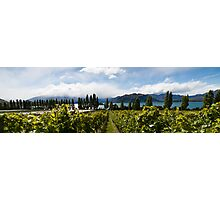 Rippon vineyard, Lake Wanaka Photographic Print