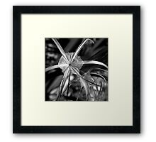 The Birth of a Dancing Star Framed Print