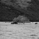 Tree. Fallen. by gematrium