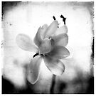 Caress (BW version) by Tania Palermo