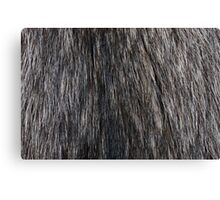 Racoon fur texture Canvas Print