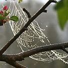 Web Of Rain drops by Geno Rugh