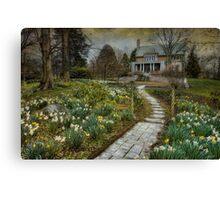 Daffodil Lane Canvas Print