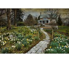 Daffodil Lane Photographic Print