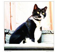 Friendly Feline by Sandra Russell