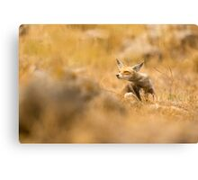 Red Fox (Vulpes vulpes). The Red Fox is the largest of the true foxes, Canvas Print