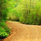 Spring Country Road by NatureGreeting Cards ccwri