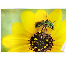 Green Bee Poster