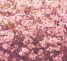 Blossoms by sarahcronkphoto