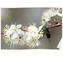 Green-eyed Bee Poster