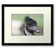 Emu - Keith Framed Print
