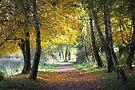 Autumn Walk by Jo Nijenhuis