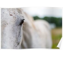 Eye of a white horse Poster